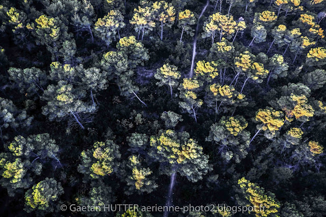 Trees in Provence by Gaetan Hutter