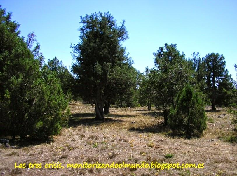 Bosque de sabinas