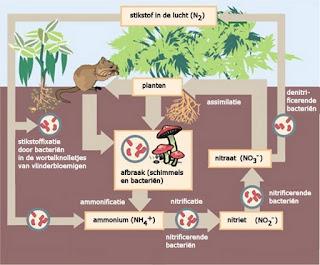 Natuurlijke stikstof cyclus in de bodem