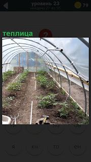 Сделана теплица, внутри которой уже растут зеленые насаждения