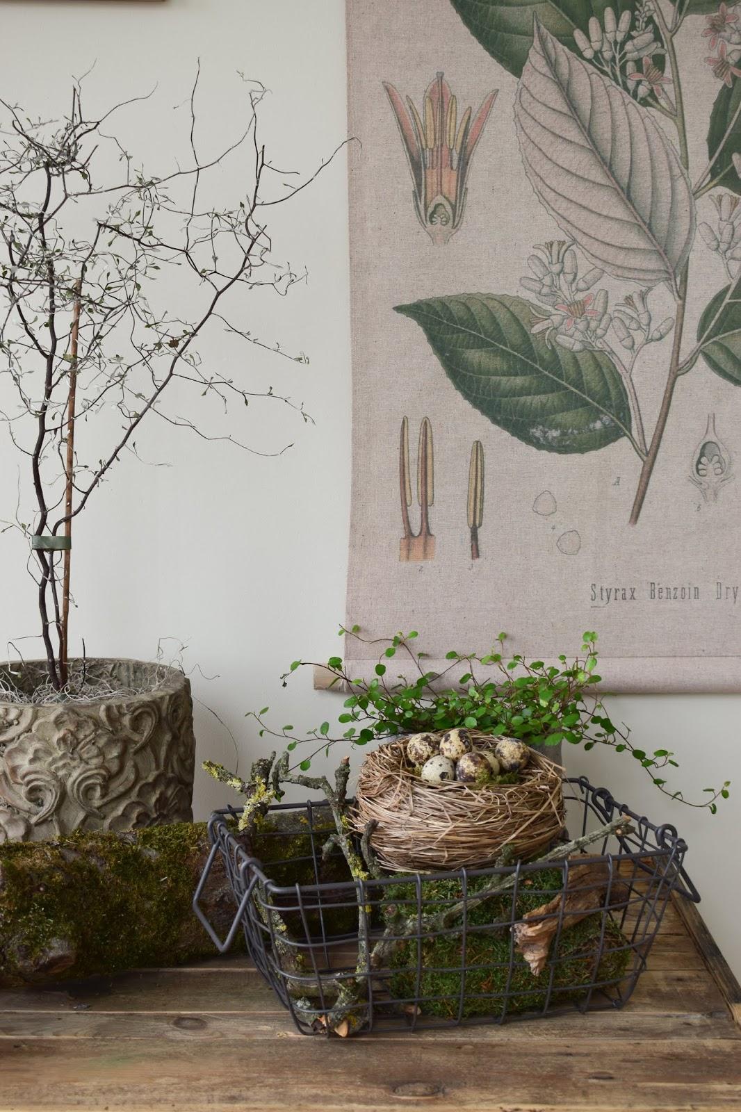 Osterdeko mit Natur Moos Mühlenbeckia Wachteleier einfach selber machen Deko dezent Ostern Sideboard Konsole Dekoidee dekorieren