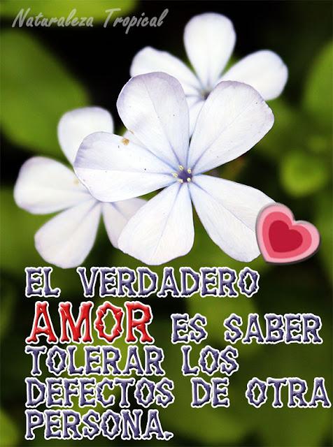 El verdadero amor es saber tolerar los defectos de otra persona.