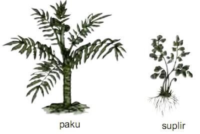 Tumbuhan yang berkembang biak dengan spora