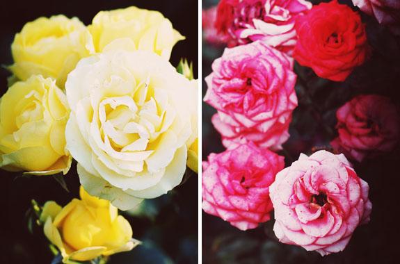 2 days in Portland international rose test garden