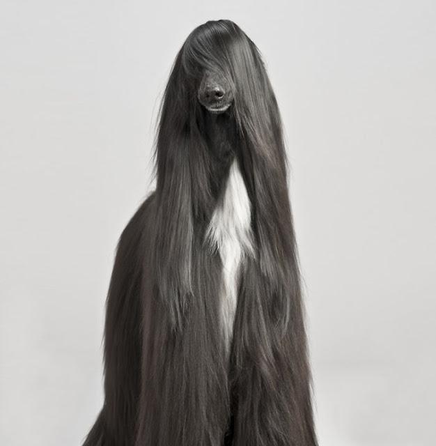 Animais com pelos e cabelos de dar inveja a qualquer pessoa