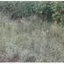 விசமாகும் வல்லை மண்