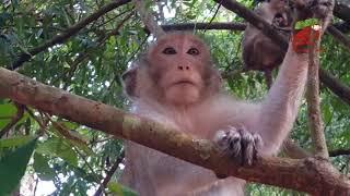 monkey-kidnapped-new-born-baby