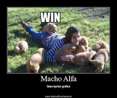 macho alfa · conlosochosentidos.es
