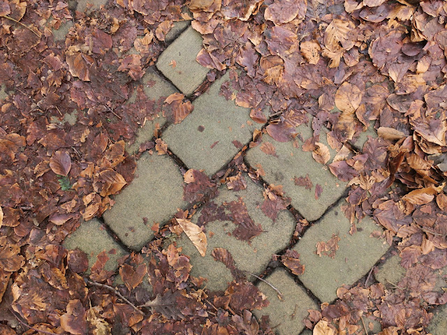Path of rectangular stones almost obscured by decaying beech leaves in February 2018
