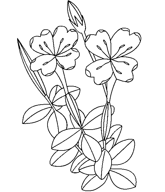Mewarnai Bunga Kamboja Paimin Gambar