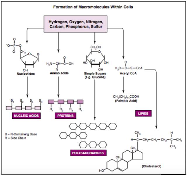 komponen sel e.coli
