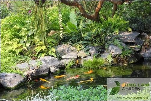 Thiết kế hồ cá Koi đẹp, thi công hồ cá Koi và bán cá Koi Nhật, chăm sóc hồ cá Koi định kỳ