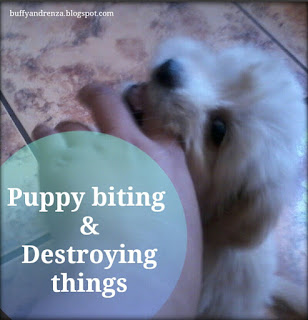 Puppy biting and destroying things