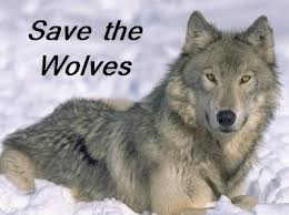 Please Help Save the Wolves