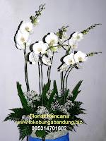 Bunga Anggrek Duka Cita di Bandung