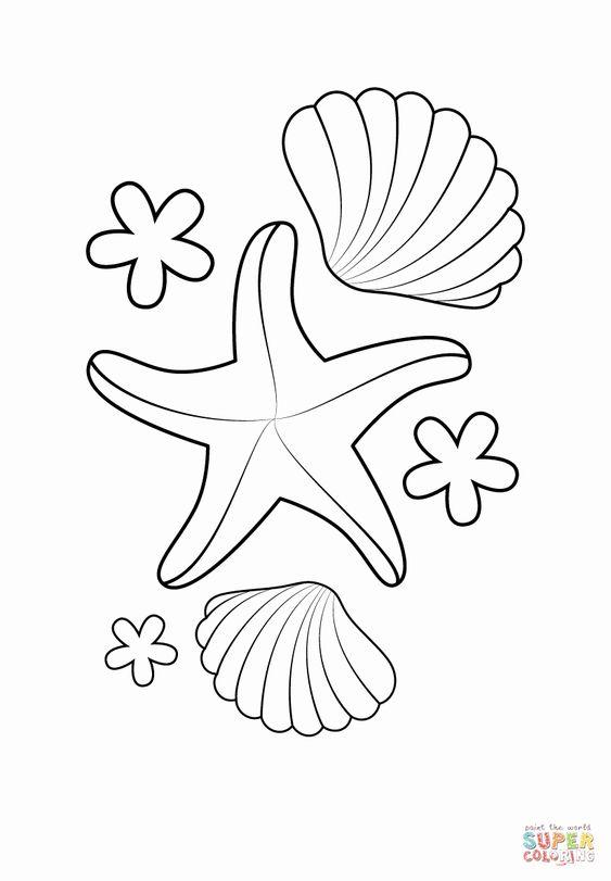 Tranh tô màu con ốc biển và sao biển