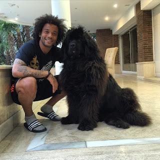 Marcelo's dogs
