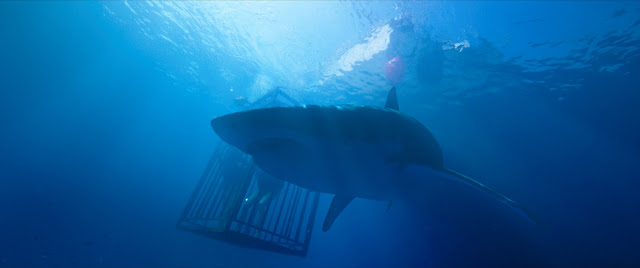 47 Metres Down Great White Shark Cage Diving Review