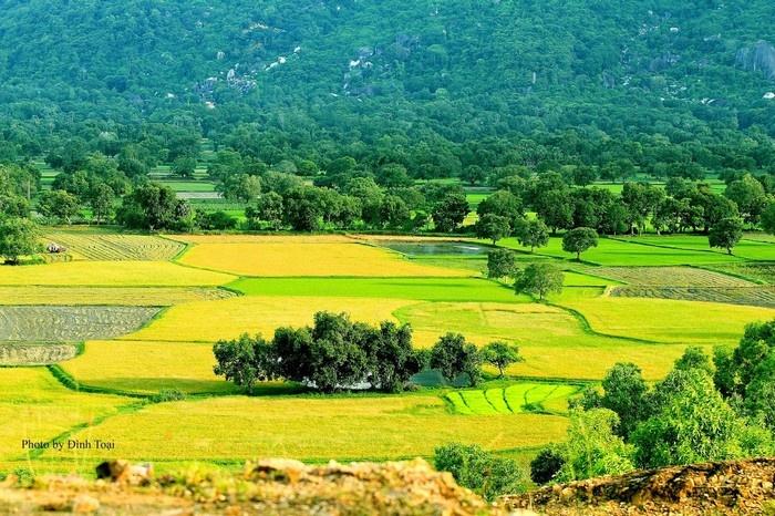 Tuyển tập 10 bài thơ ngắn hay viết về cây lúa Việt Nam