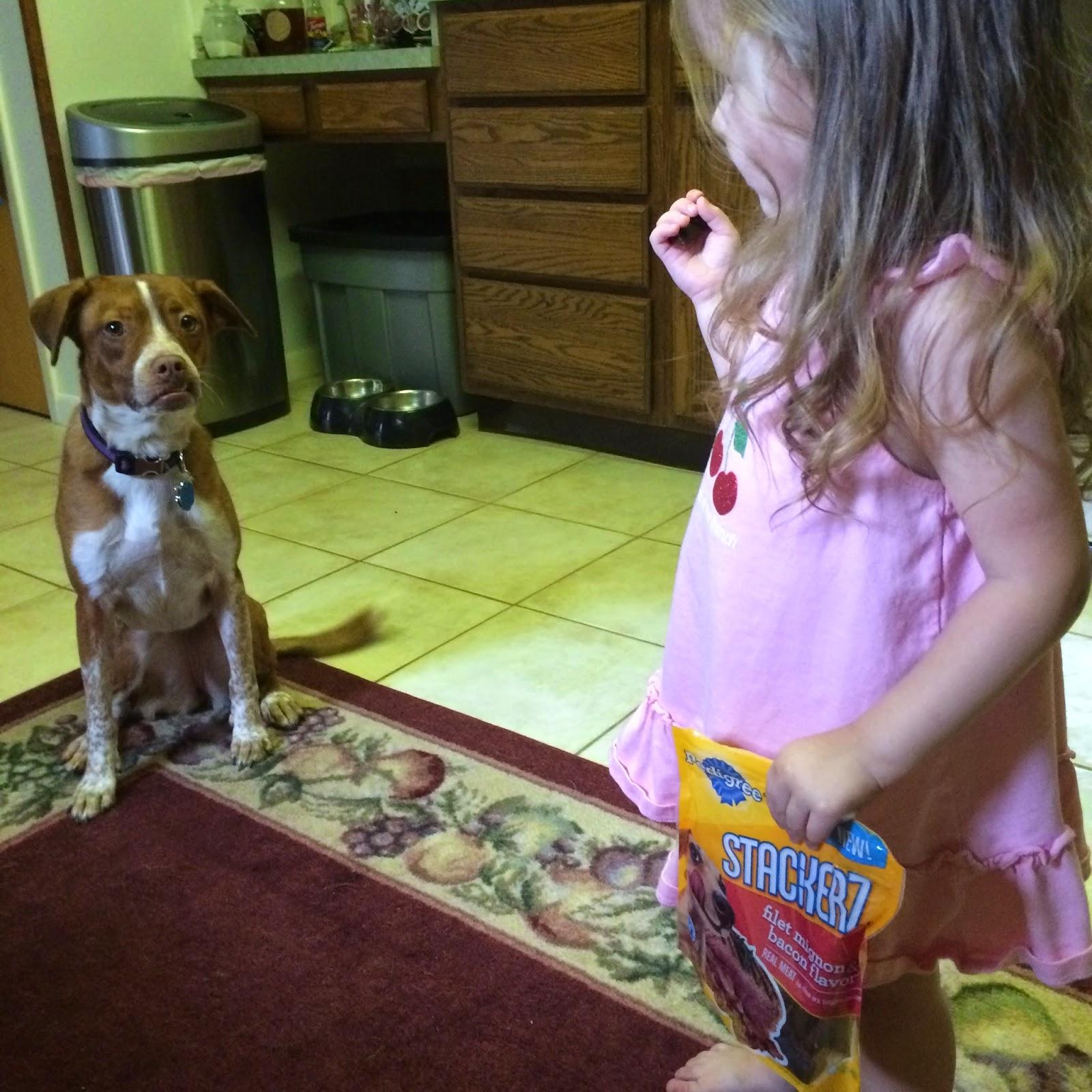 feeding dog #stackerz dog treat
