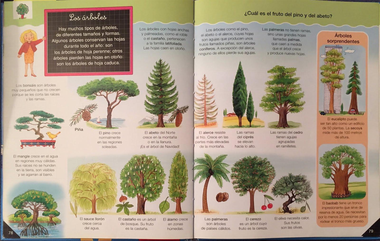 Elmer y compa a los rboles sus hojas iv for Ejemplos de arboles de hoja perenne
