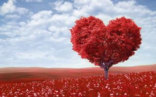 imagem Macuacua Jr - Segueira do Amor