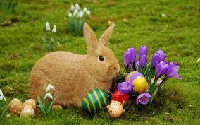 Easter bunny pics