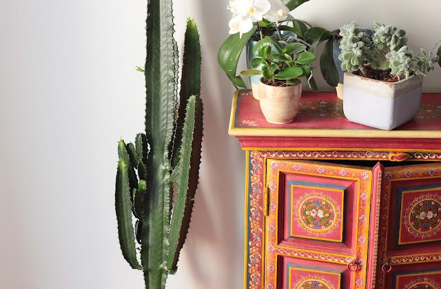 rempoter un cactus