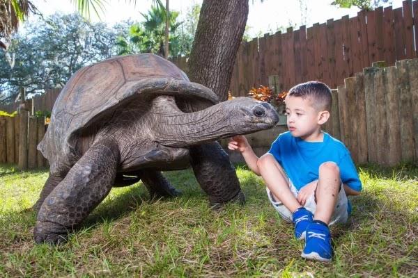 Tartaruga no zoológico Lowry Park em Tampa