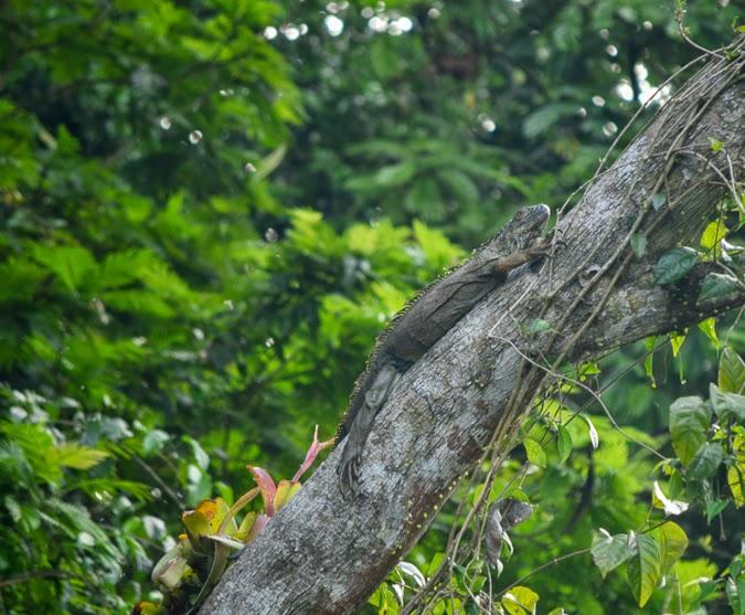 Wildlife in Tortuguero National Park