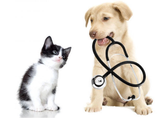 Best Flea Medicine For Cats and Dogs