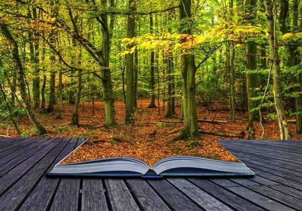 Libro Landsacape