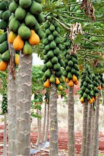 Bảo quản trái cây bằng khí ozone