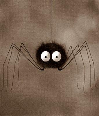 des livres en ribambelle le sens cach avoir une araign e. Black Bedroom Furniture Sets. Home Design Ideas