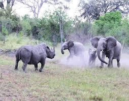 The Journey safari afrinac
