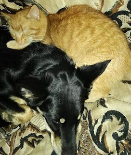 Zwierzęta miłość