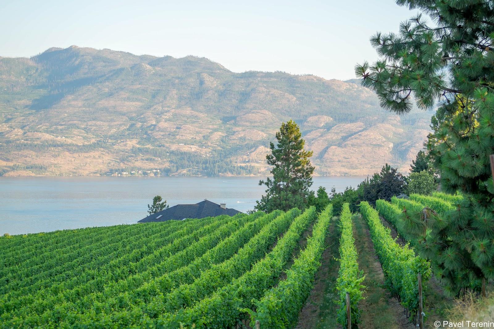 Наша дорога в отель проходила вдоль бесчисленных виноградных полей.