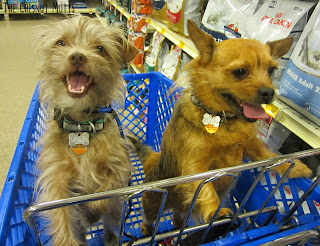 Bailey and Jada at PetSmart checking out Royal Canin