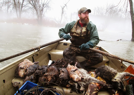 Trapping Muskrats: Recap and lessons learned