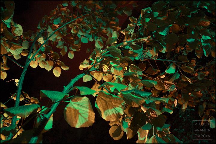 fotografia,naturaleza,valencia,hojas,arbol,noche,semaforo,luz,led,serie,arte