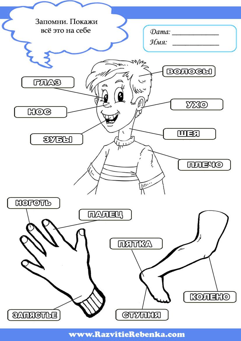 Картинки Для Детей Человек Части Тела