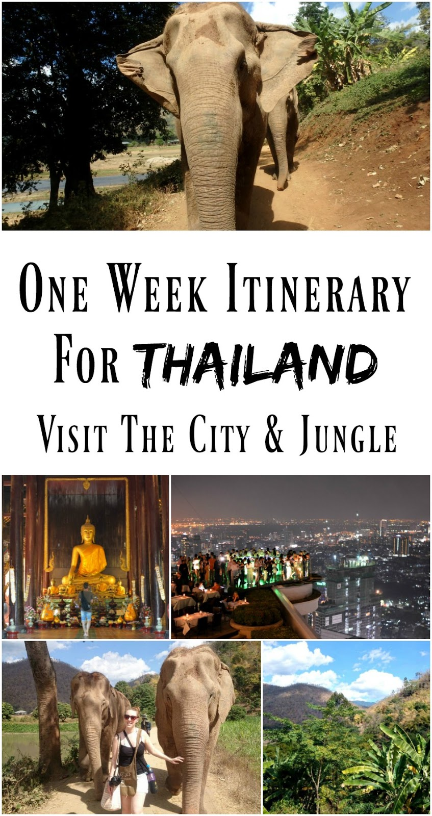 PIN FOR LATER: A one-week itinerary for Thailand! Visit Bangkok and Chiang Mai in one week, and see everything from the elephants to the beautiful Buddhist temples.