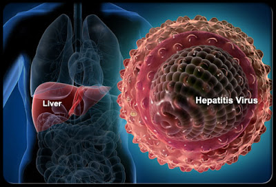 hepatitis b হেপাটাইটিস-বি