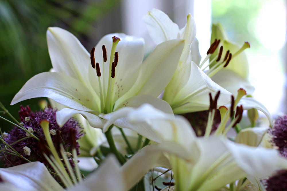 White lilies - UK lifestyle blog