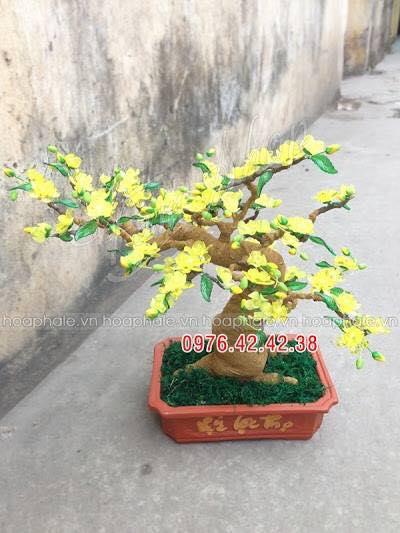 Goc bonsai cay hoa mai tai Tran Binh