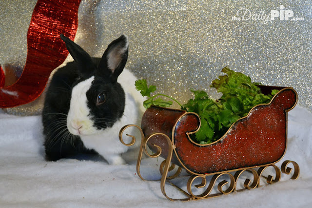 Here are 31 ways to celebrate the holidays by helping animals
