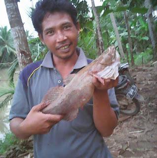 http://indraidut50.blogspot.com/2016/12/memancing-ikan-betutu-dan-umpan-ikan.html
