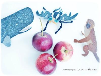 КОАПП, яблоко, мартышка, пестрокрылка, кашалот