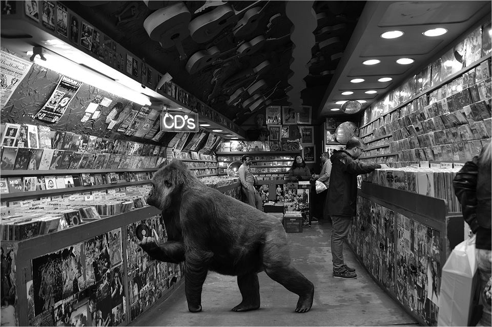 02-Gorilla-Ceslovas-Cesnakevicius-The-Zoo-on-our-Streets-Black-and-White-Photography-www-designstack-co