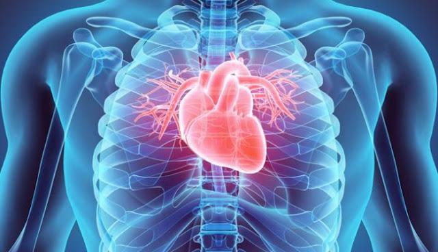 Manfaat Kacang Kedelai untuk Jantung di Bantah